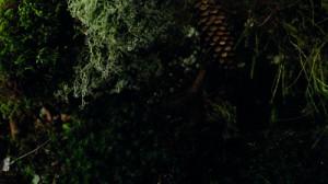 santraandthetalkingtrees (10,4 x 6,1)